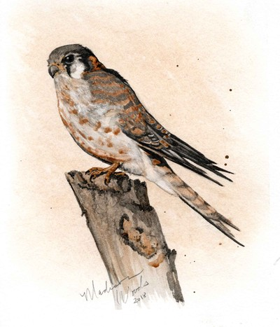 Madison Woods - Kestrel No 3